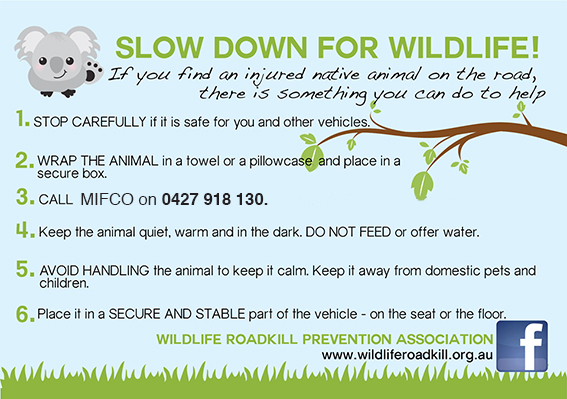 slowdownforwildlife